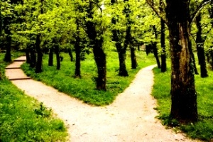 Abortion - paths diverging in woods