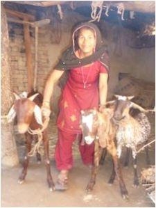 Upaya - goats