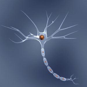 Nerve cell model